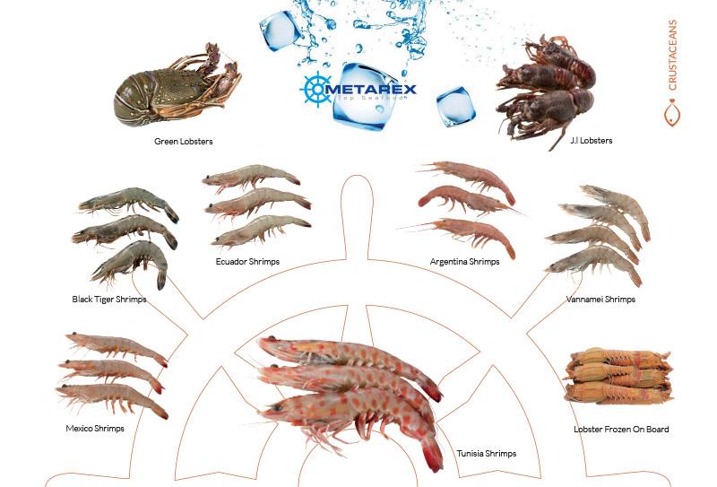 crustaceans1