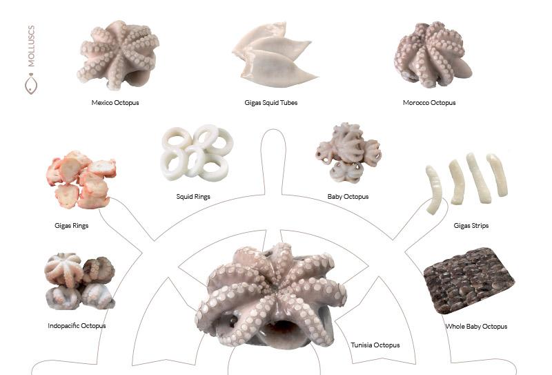 molluscs1